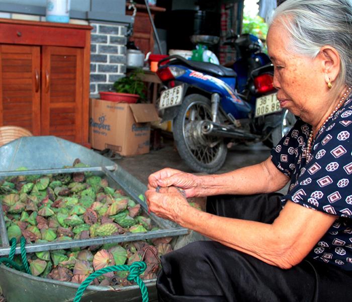 Người dân Hà Tĩnh hái đài sen thu tiền triệu mỗi ngày